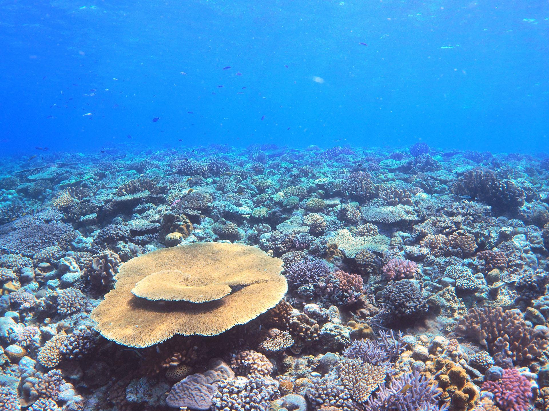 世界に誇るサンゴ礁
